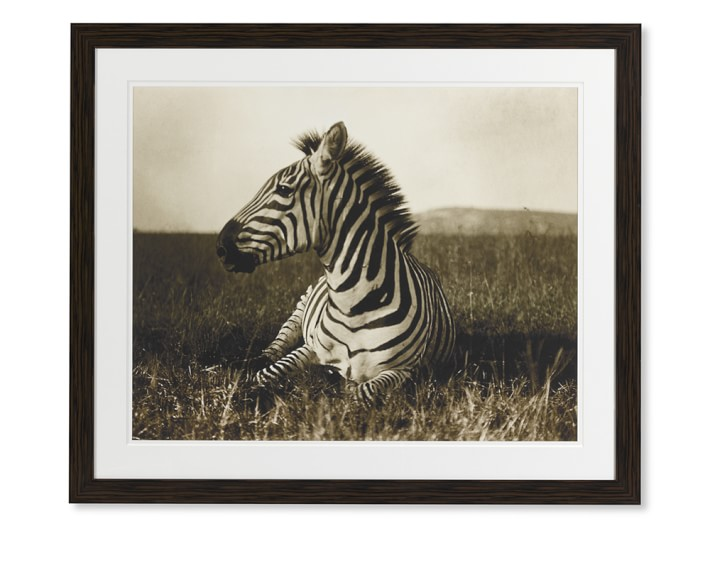 Image for Majestic Kingdom Zebra Photography